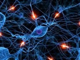 Misfiring nuerotransmitters, causing migraine